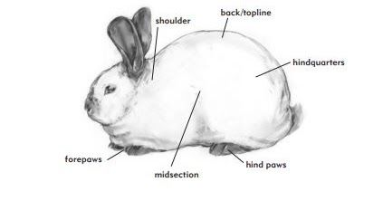 The physical needs of rabbits include shelter food water