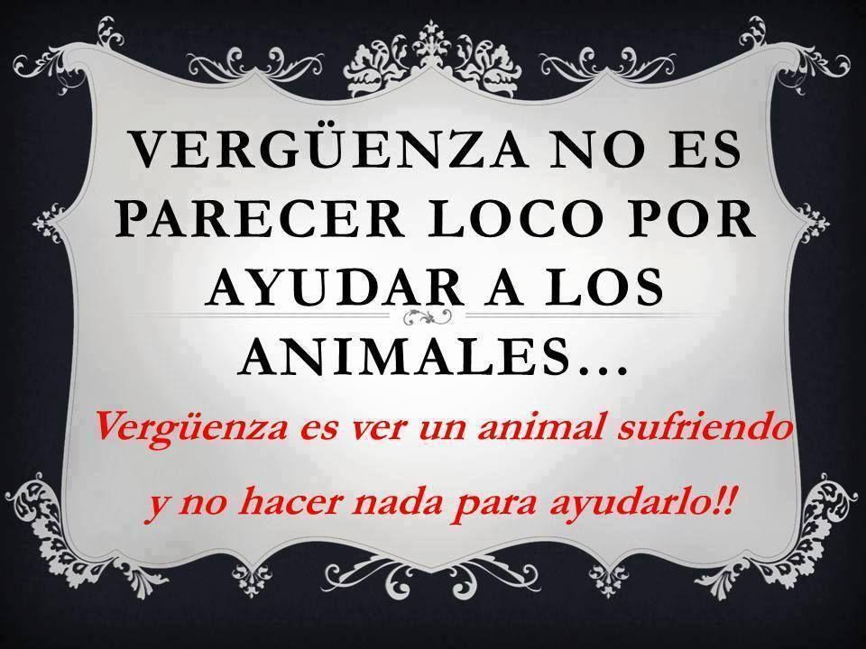 Verguenza No Es Parecer Loco Por Ayudar A Los Animales