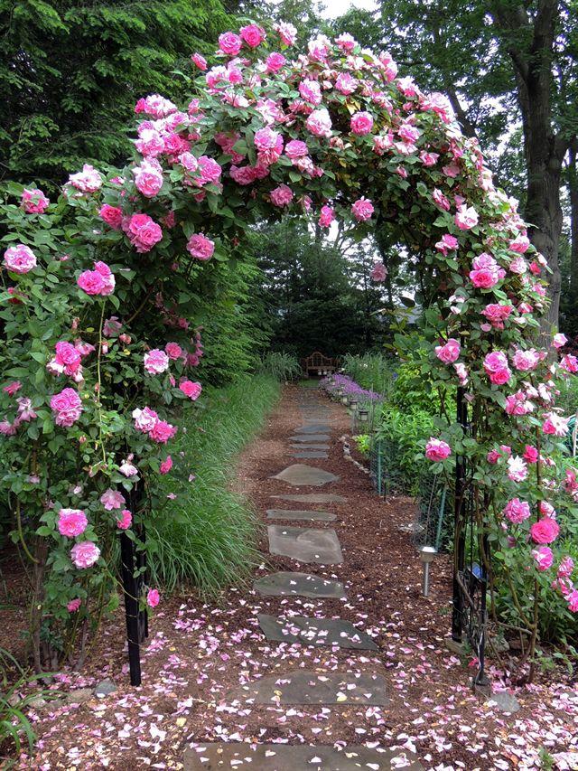 Gardening In Upper Saddle River Nj With Images Rose Garden