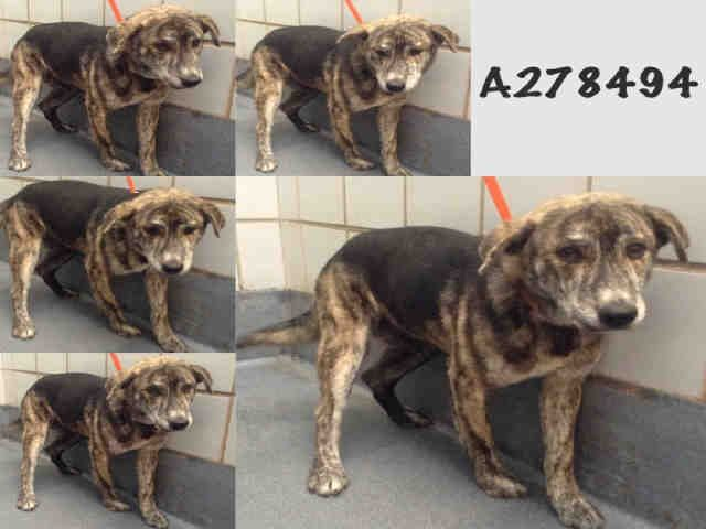 San Antonio Acs Shelter Hello My Name Is Rugby Id A278494 I Am