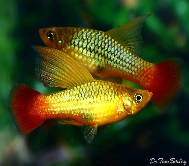 تکثیر و پرورش ماهیان زینتی Tropical Fish Aquarium Aquarium Fish Saltwater Aquarium Fish