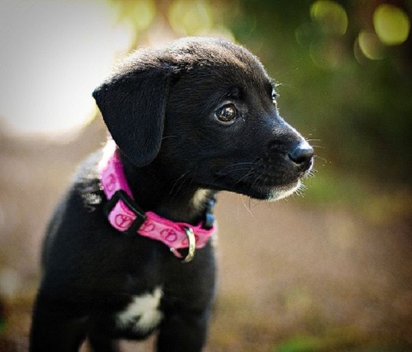 I Want One Of These And One Border Collie On My Farm With Two