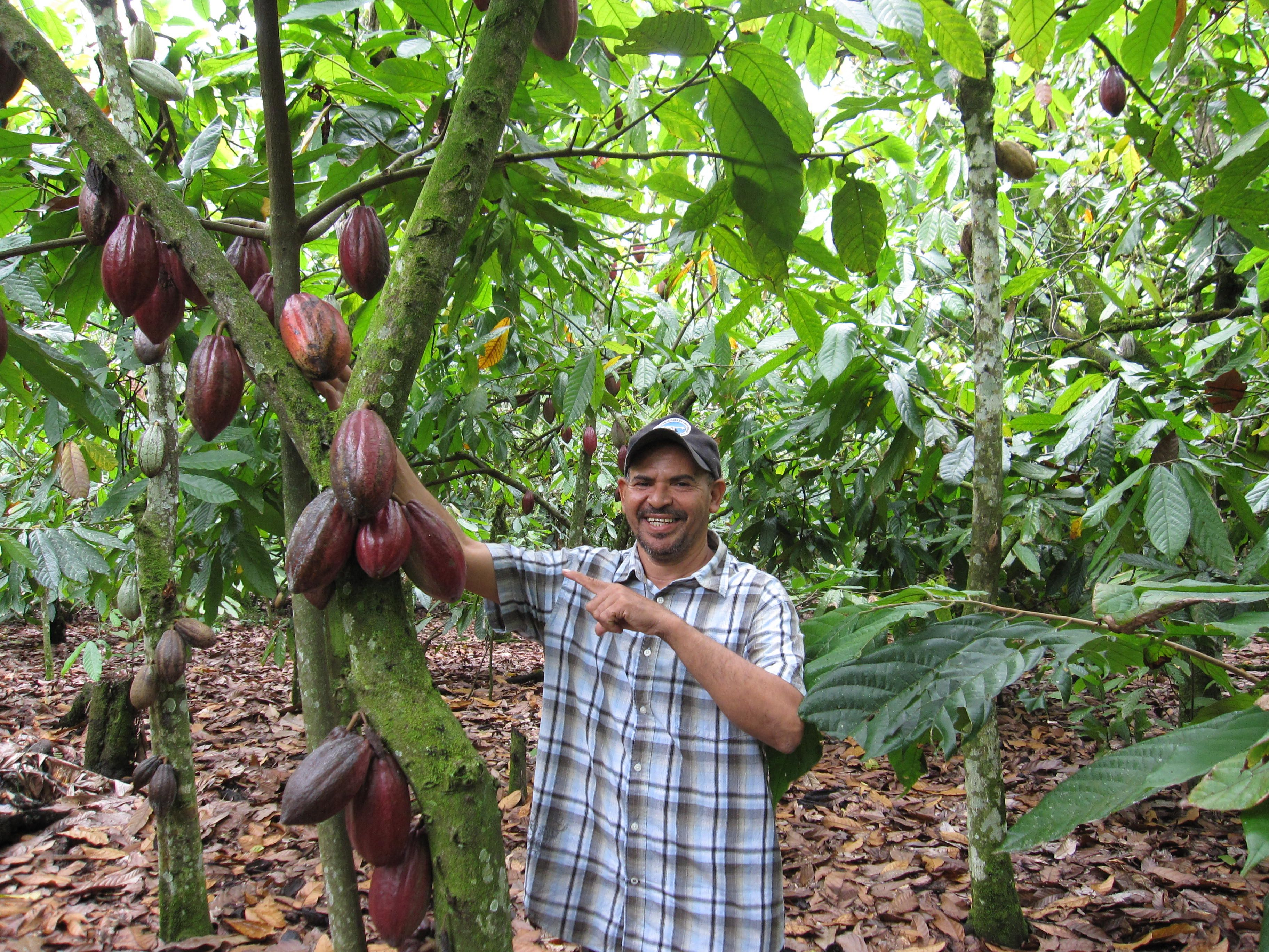 The Dominican Republic is in the top ten for producers of cocoa beans… | 6.DOM.REP.:CACAO,SUGAR FIELDS,TOBACCO FIELDS | Pinterest