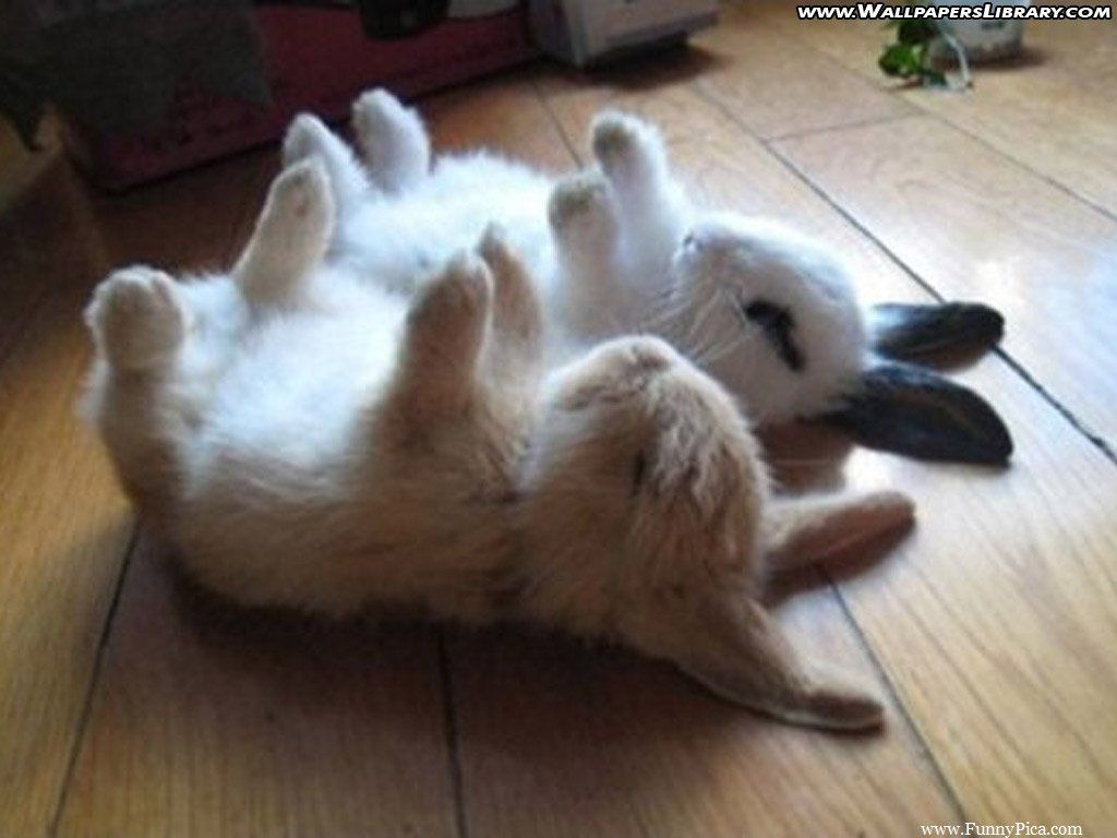 Funny rabbit funny rabbit pictures pictures of rabbits funny - They Ran Out Of Batteries Animals Adorable Animal Bunny Humor Funny Pictures Funny Animals Rabbits Funny Images