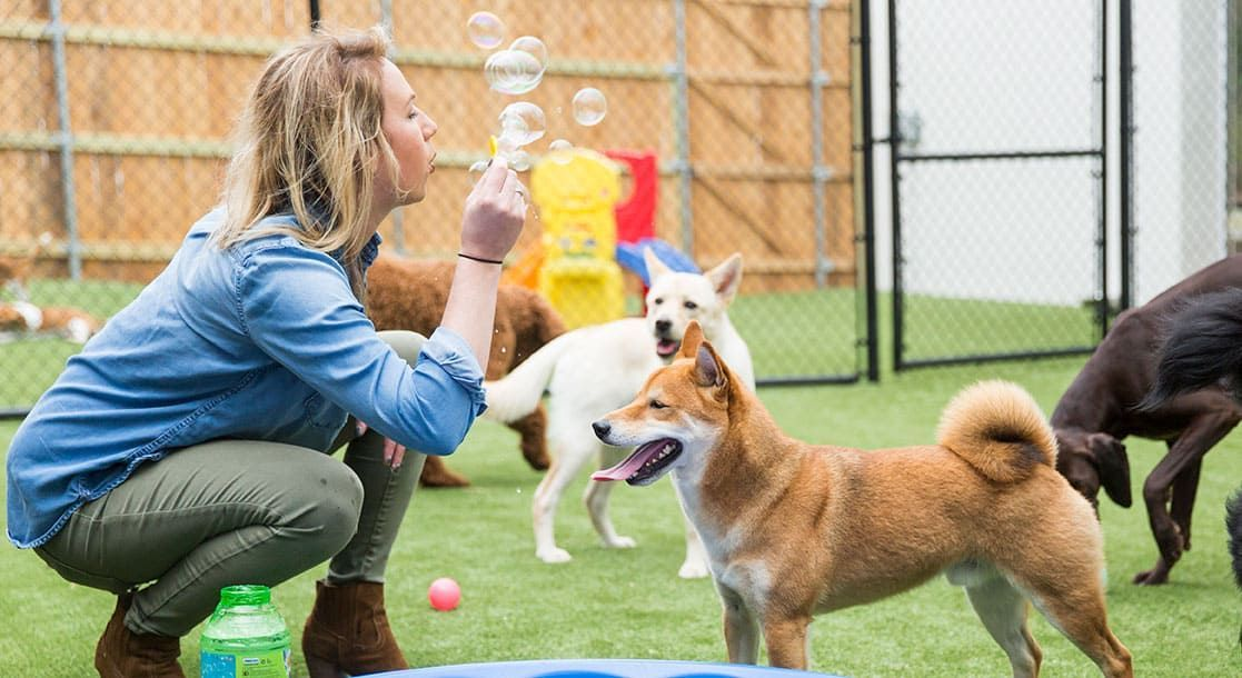 When I Scroll Through The Vibrant Social Media Posts For Pet Resorts In Arkansas I Find Photo After Photo Of Pampered Dog In 2020 Pet Resort Pamper Pets Pampered Dogs