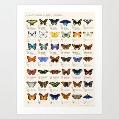 Butterflies of North America Art Print by Eleanor Lutz -