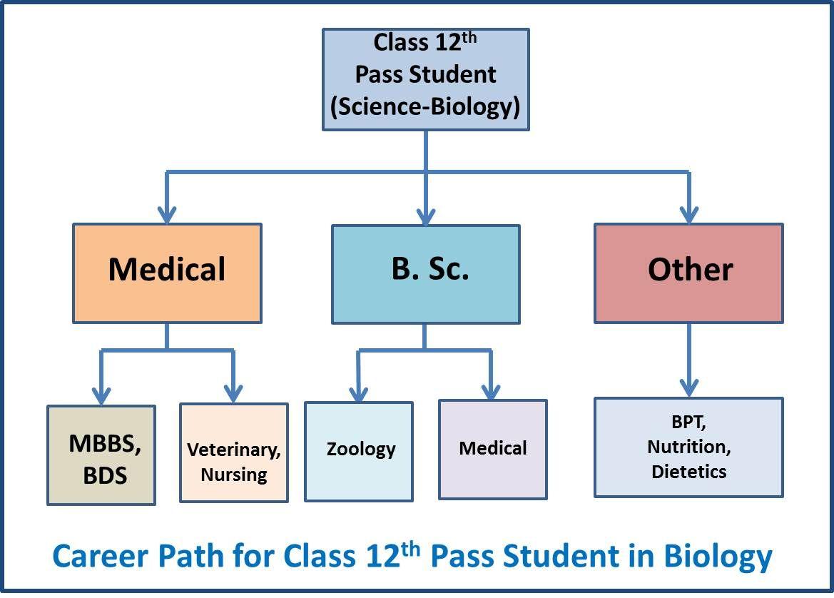careerguide12thpassstudentsciencebiologyflowchart