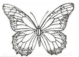 Kelebek çizimleri Ile Ilgili Görsel Sonucu Bursa Butterfly
