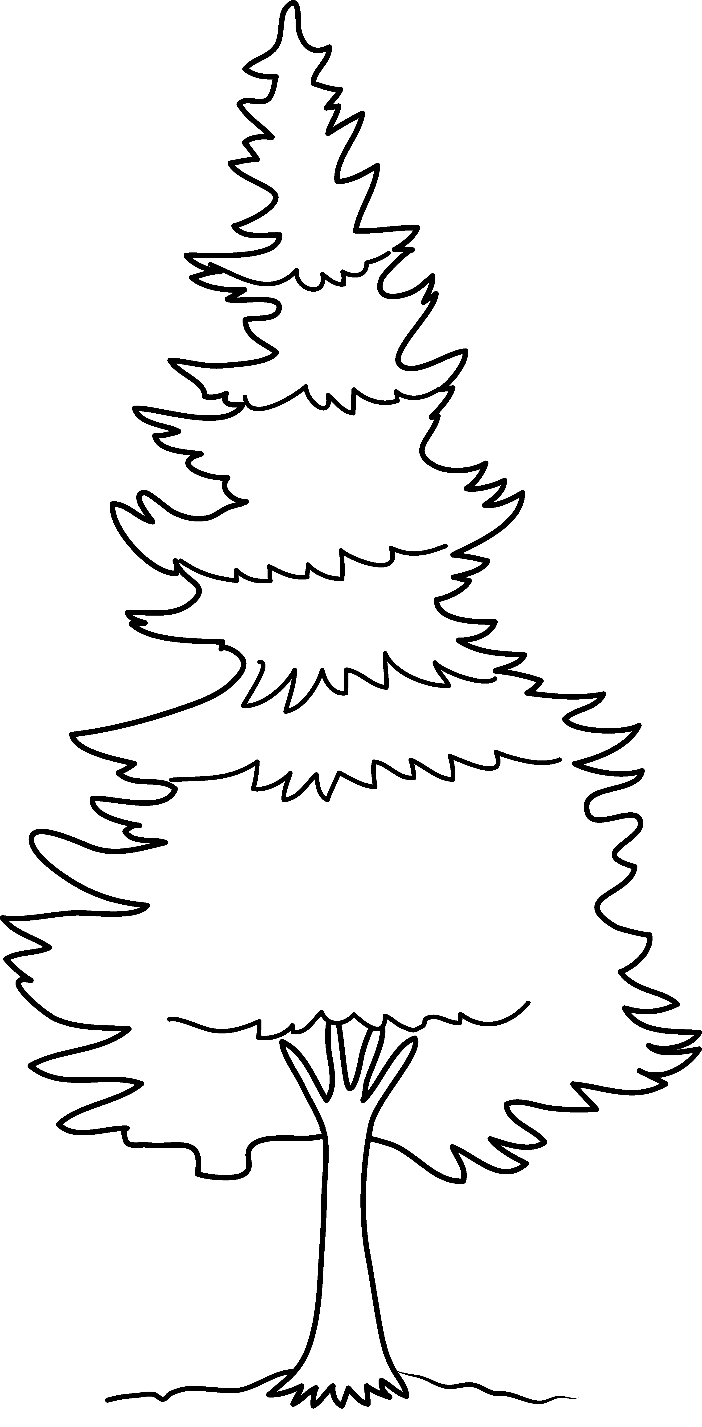 White Pine Tree Colouring Pages Tree Coloring Page Coloring Pages White Pine Tree