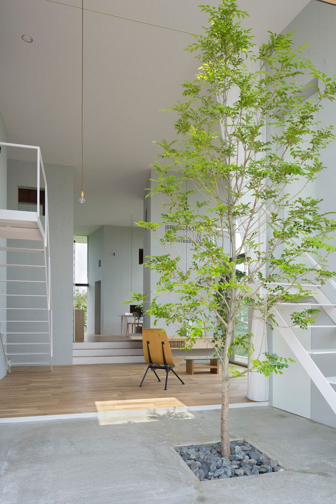 un arbre dans la maison indoor vegetation pinterest la maison vegetal et jardin int rieur. Black Bedroom Furniture Sets. Home Design Ideas