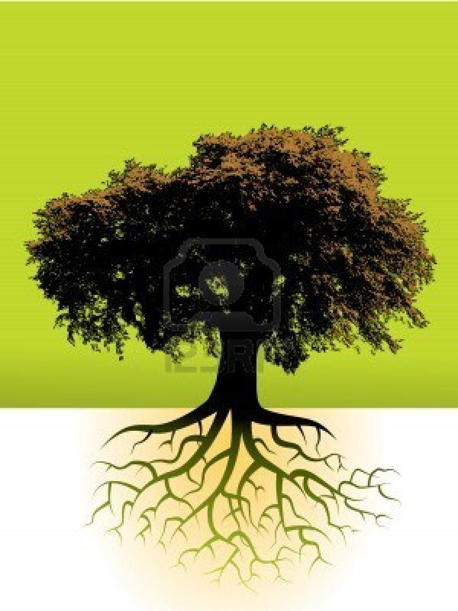 A Large Tree With Its Root System Shown Tree Roots Root Vector Roots