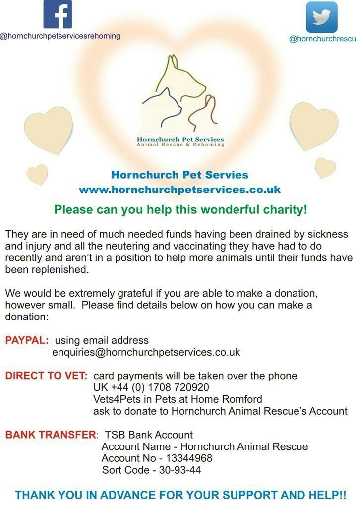 Hornchurch Pet Services Has To Turn Animals Away Due To Lack Of Money Service Animal Pets Rehoming