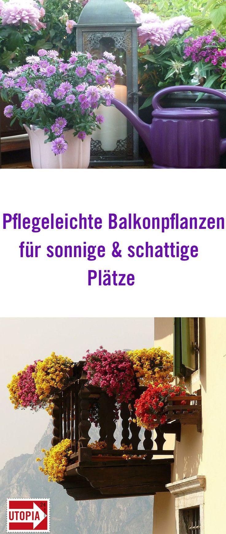 Balkonpflanzen Pflegeleichte Sorten für sonnige und