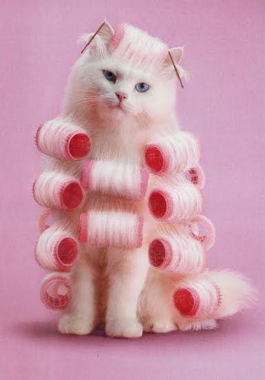 cat in curls