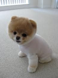 Boo! Cutest puppie in the world!! <33