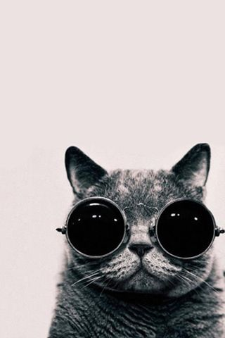 Cat With Glasses Iphone Wallpaper