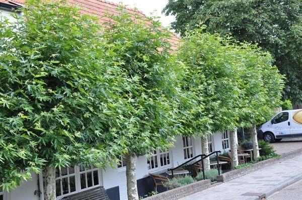 Pin by Huisje Boompje Beter App on Bomen in de tuin   Pinterest