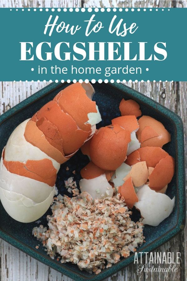 Using Eggshells - Smart Garden Tips