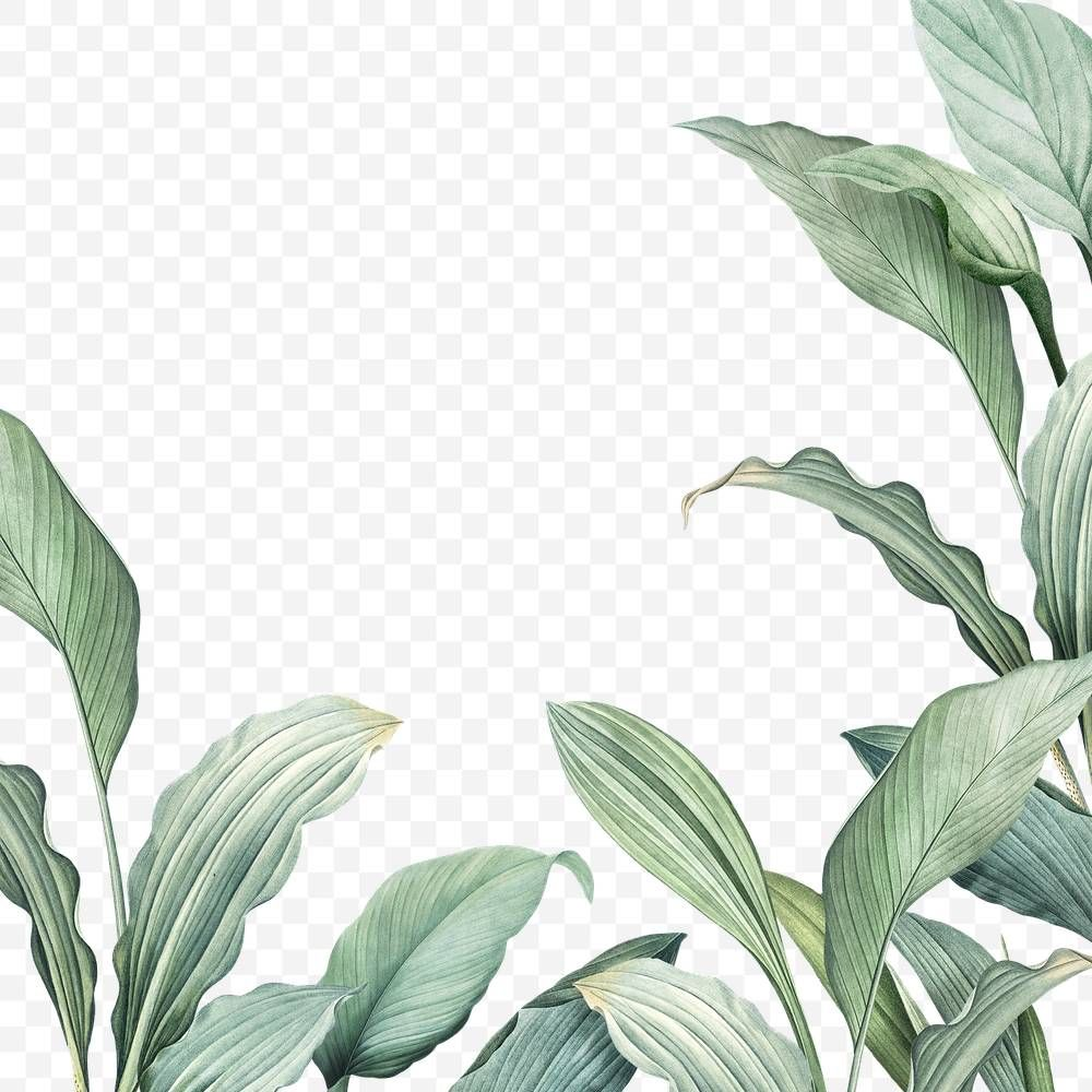 Hand Drawn Tropical Leaves Png Transparent Background Free Image By Rawpixel Com Manotang Tropical Leaves Leaf Background How To Draw Hands