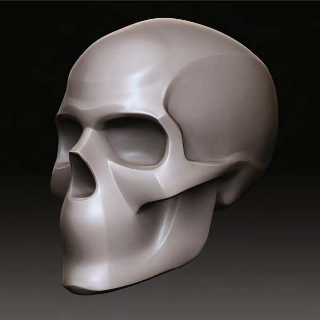 Skull structures different races final, sorry