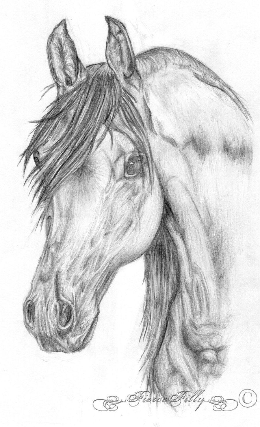 Rearing Horse Drawing  Arabian Horse Head By Fiercefilly