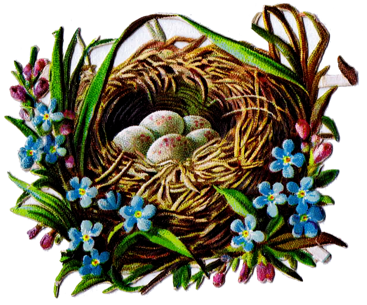 Pin on Bird Eggs And Nests
