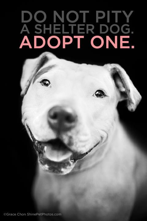 Do Not Pity A Shelter Pet Adopt One Don T Forget Kitty Dogs Adoption Shelter Dogs