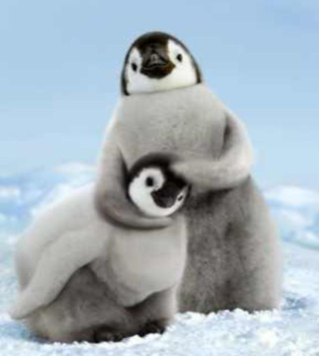 penguins | Too Cute | Pinterest | Animaux mignons, Animaux ...