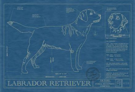 Labrador retriever printing companies labrador retriever and animal blueprint company labrador retriever dog print rendered in the original format of a working malvernweather Gallery