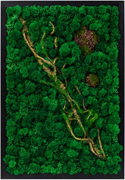 Amazon Com Lvzhihuan Moss Wall Decor Real Preserved Moss No