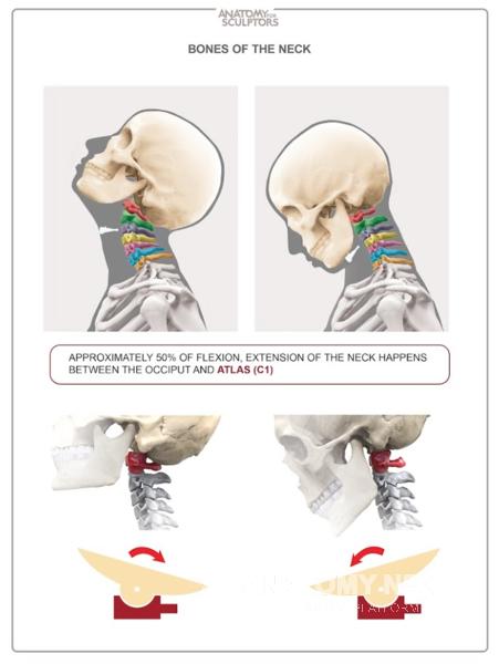 Anatomy Next Anatomy Tools Books Links Blog Videos And Know