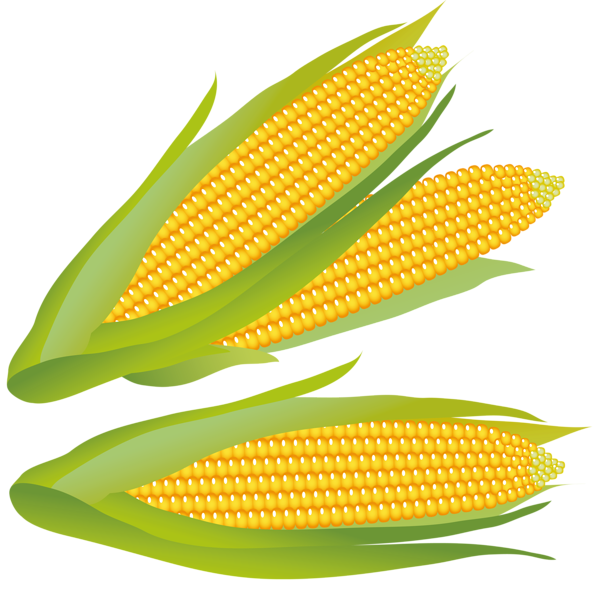Gallery Recent Updates Vegetable Illustration Image Corn Clip Art