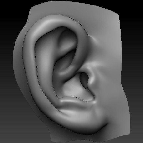 Perfect Ear 3d Model 3d Pinterest 3d Zbrush And Anatomy