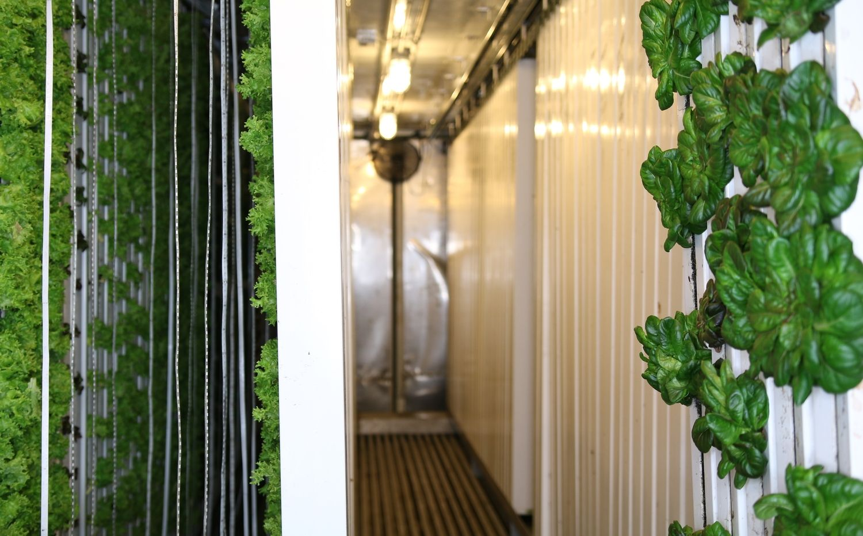 Shipping container farm hydroponic produce Urban farming