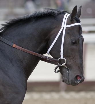 Saratoga: Calibrachoa retired | Daily Racing Form | Race Horses ...