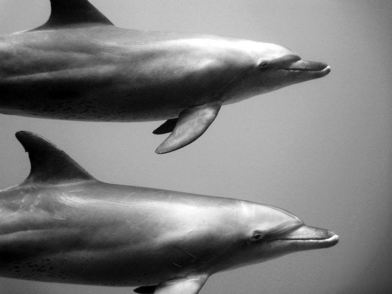 Galería | Fotografía submarina de Jorge Cervera HauserDate