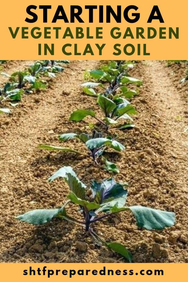 Starting A Vegetable Garden In Clay Soil Starting A 400 x 300