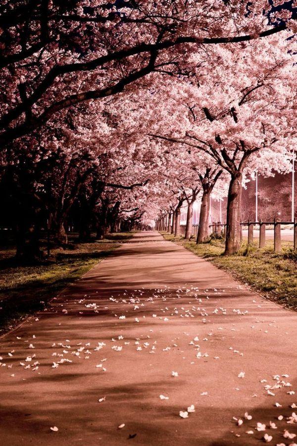 Le cerisier japonais – 85 points de vues – Archzine.fr