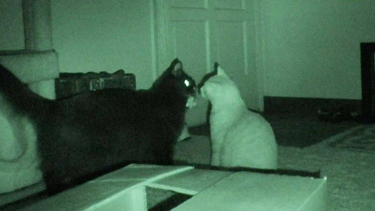 Gatos na noite