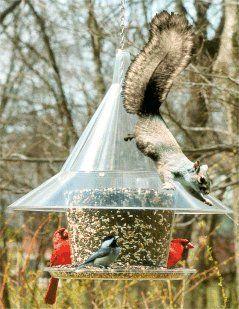 Squirrel proof bird feeder with good DIY potential--big