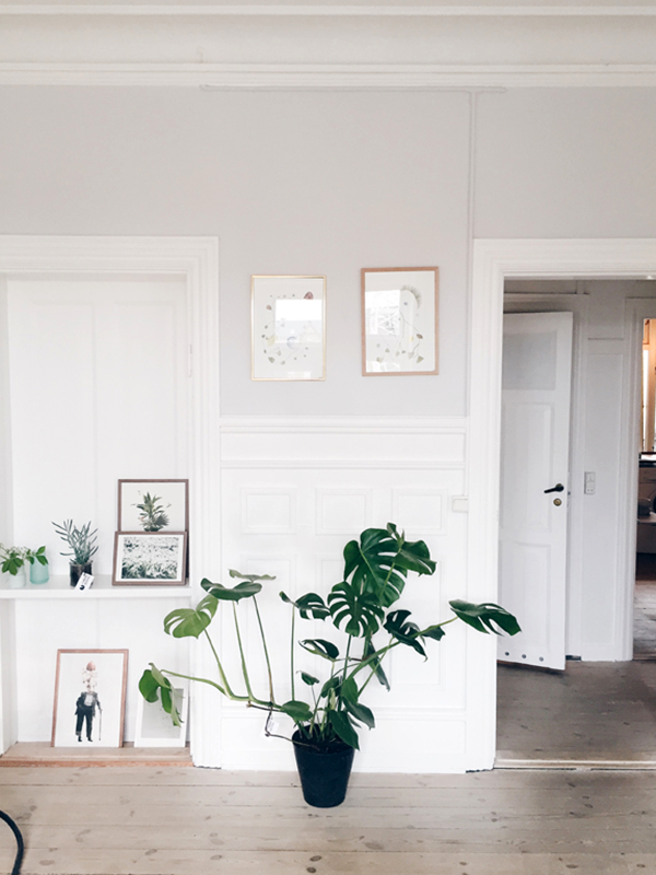 It's time to get this plant as my new friend.  FindersKeepers apartment | foto Allan Torp