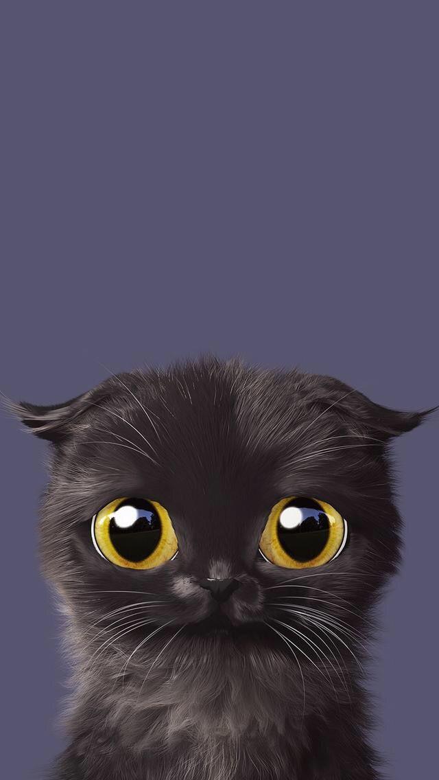 Kitty Cat Wallpaper Hewan Binatang Animasi