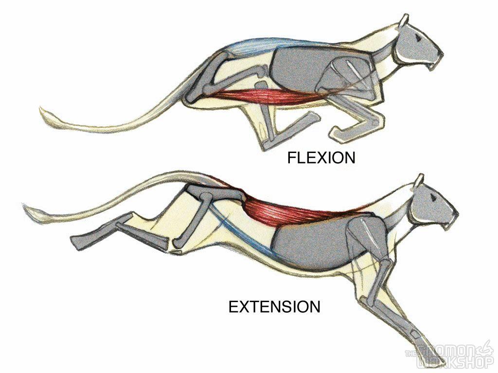 The Gnomon Workshop - Introduction to Animal Anatomy | Animals ...