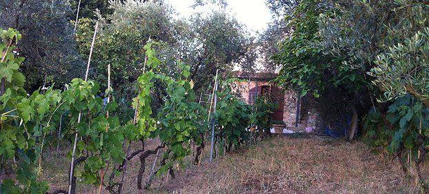 Le Bonta' di Sant'Antonio - the farm and surroundings
