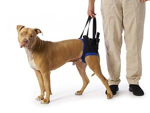 Rear Harness To Help Dogs And Cats Walk In 2020 Dog Sling Pet Harness Dogs