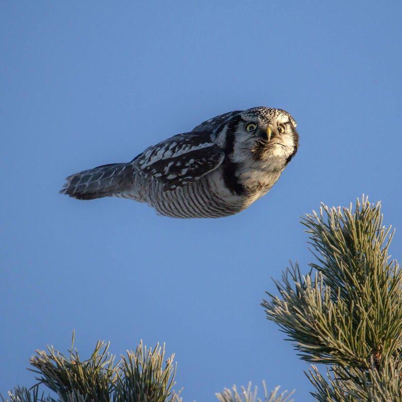 Whaaat ?!? I am flying...
