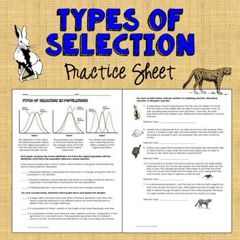 types of natural selection practice natural selection worksheets and natural. Black Bedroom Furniture Sets. Home Design Ideas