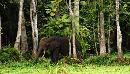 forêt tropicale - Gabon