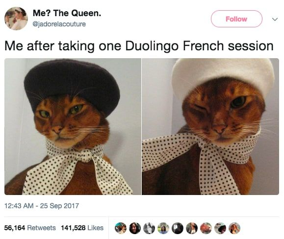 30 Tweets From This Month That Ll Make You Laugh For At Least Three Minutes Funny Tweets Funny Cat Memes