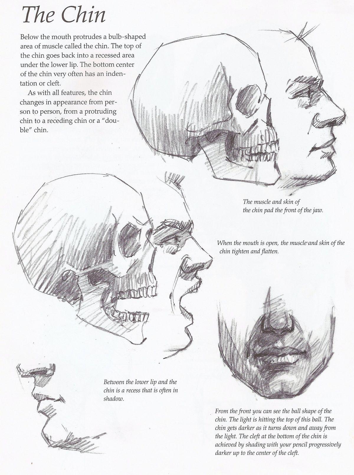 Pin by Art Lover on skeletal anatomy   Pinterest   Human head ...